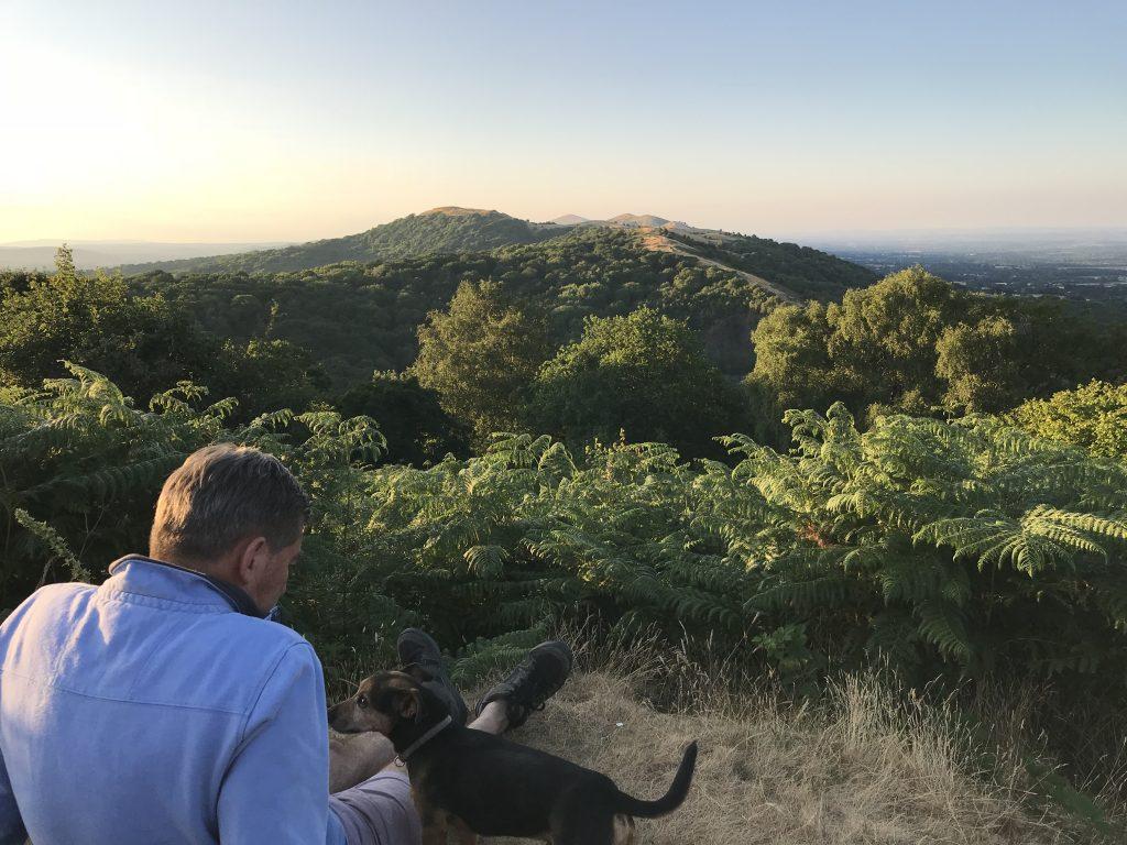 Dog walk view
